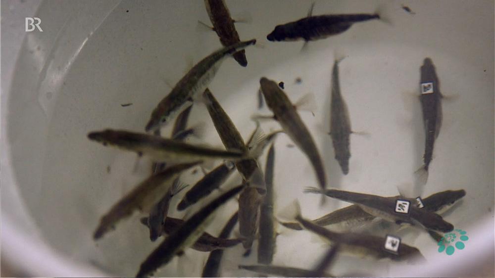 bayerischer_rundfunck_schwarmverhalten_barcodes_fish