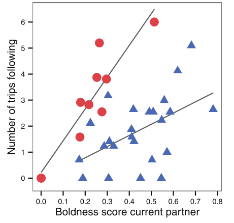 This plot shows that the number of trips focal fish went out of cover and joined their partner (following) was positively related to the boldness of their current partner. Boldness scores and the nr of following trips were square-root transformed