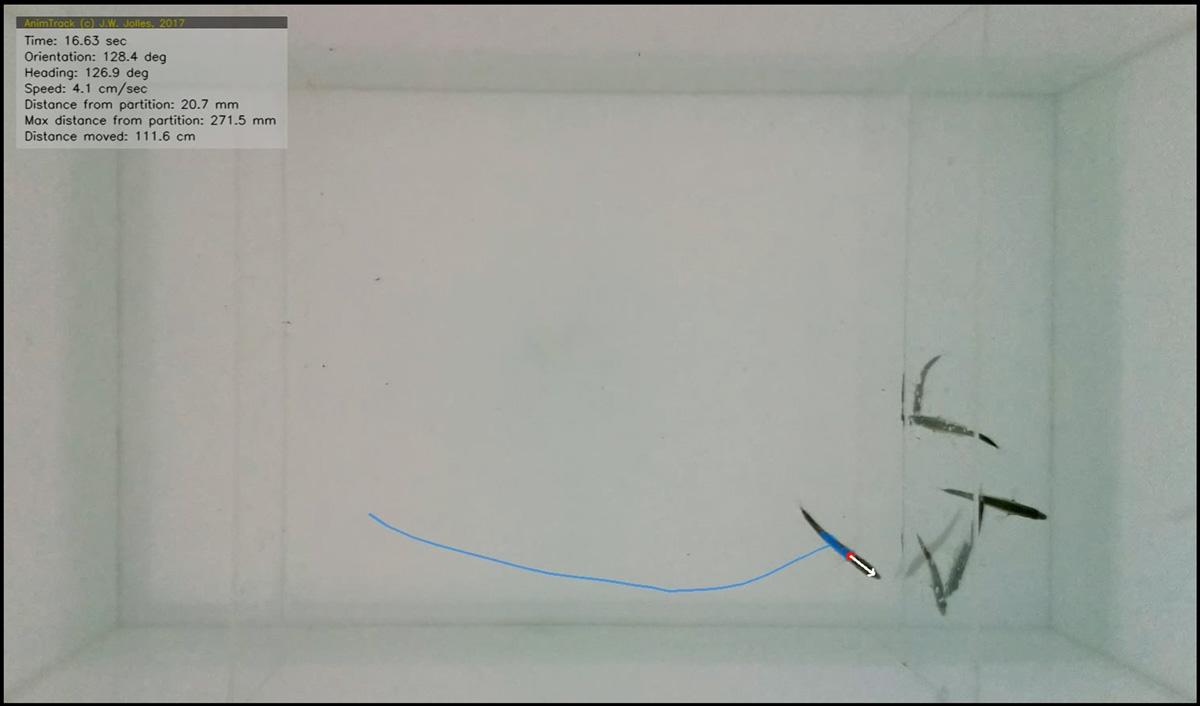 sociability-tracking-animtrack-jolles