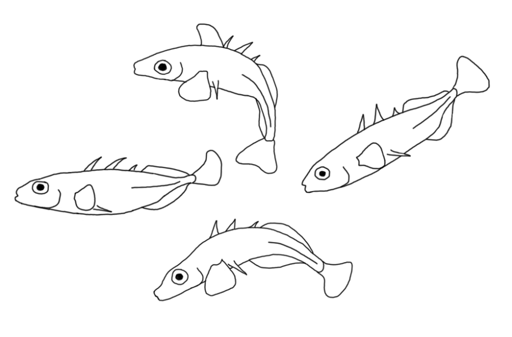 stickleback-drawing