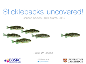 sticklebacks-uncovered-talk-linnean-society
